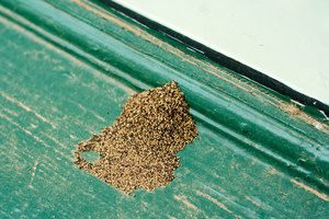 Termite Frass A Sign Of Termites Anyone Can Identify