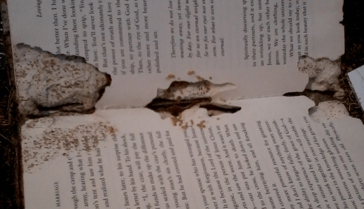 Do Termites Eat Normal Paper What About Cardboard