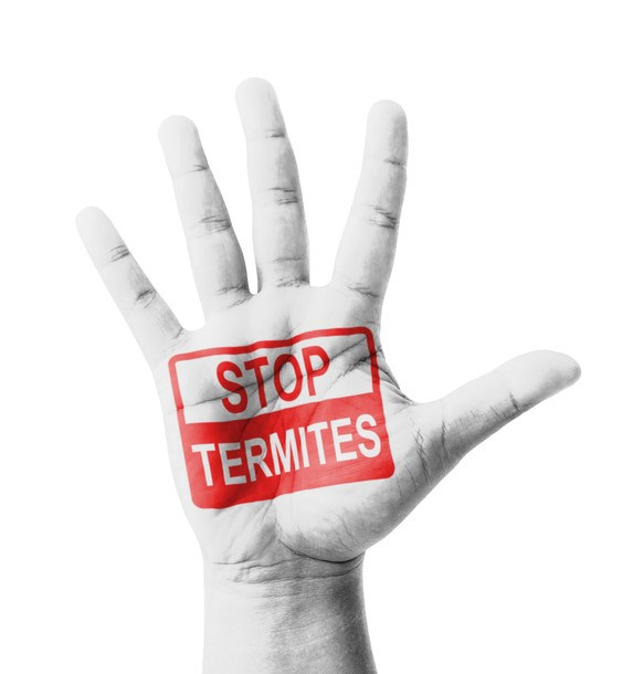 Termite Treatment Prices 2  sc 1 th 232 & Termite Treatment Cost Does Not Have To Be So High - 2017 Price Guide